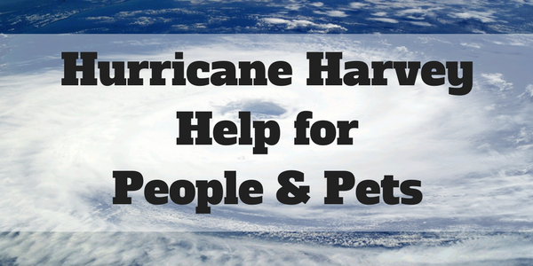 Hurricane Harvey help for people and pets