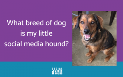 What breed of dog is my social media hound?